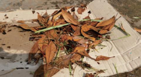 枯れ葉 落ち葉