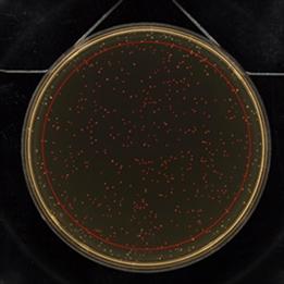 菌 コロニー 撮像